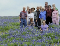 St.-Stephen_Bluebonnet_Group1